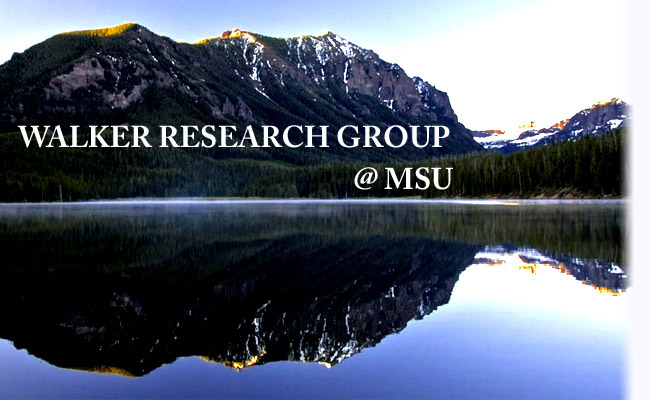 Walker Research Group at MSU